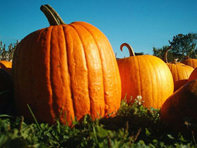 pumpkin for bread
